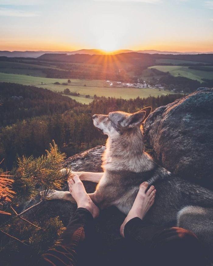 12. follow me, инстаграмм, собака, собака - друг человека, флешмоб, флешмобы. instagram, фото природы, фотограф