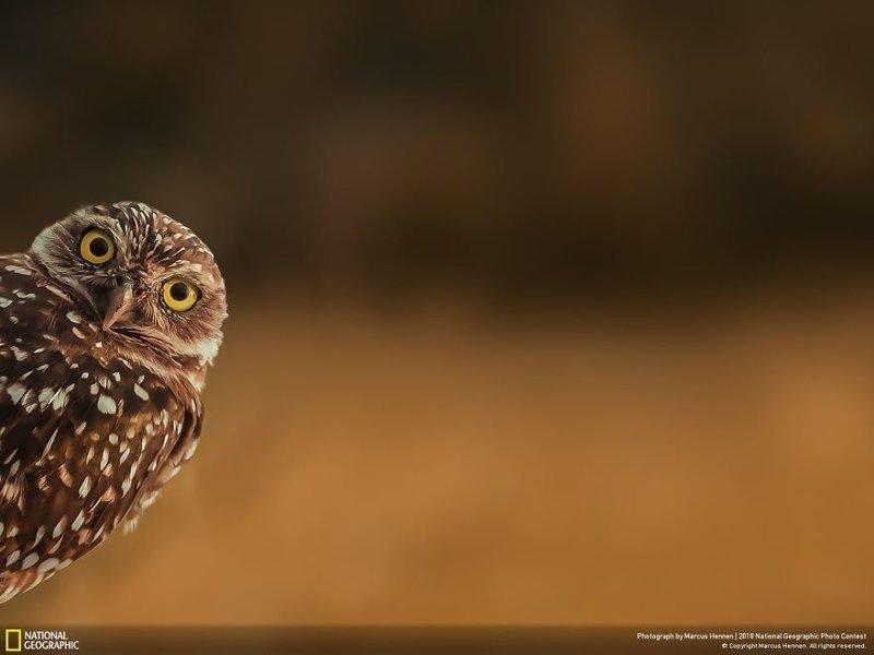 Любопытство, Маркус Хеннен national geographic, конкурс, красота, природа, удивительно, фото, фотография, фотоподборка