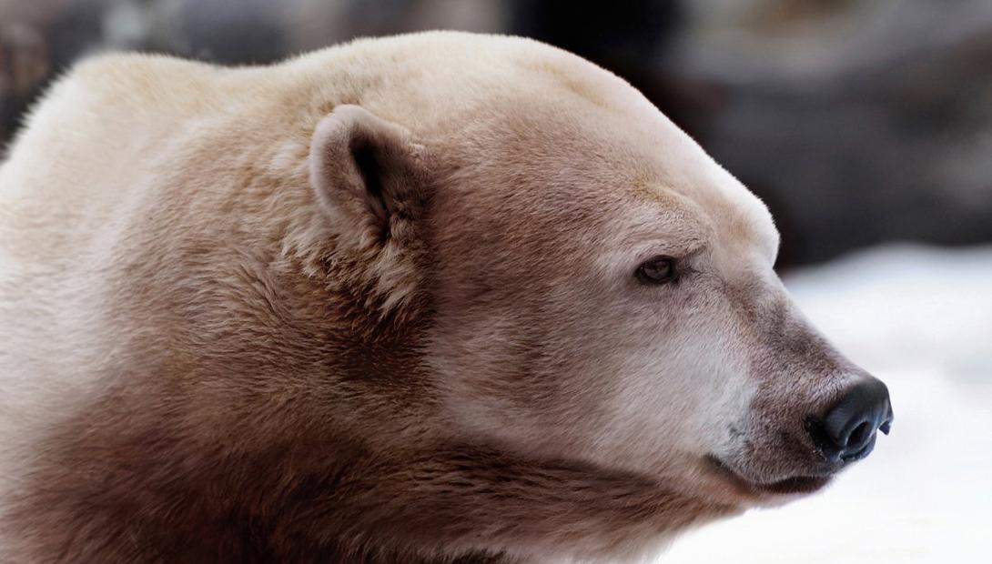 Что будет с животными, если изменится климат
