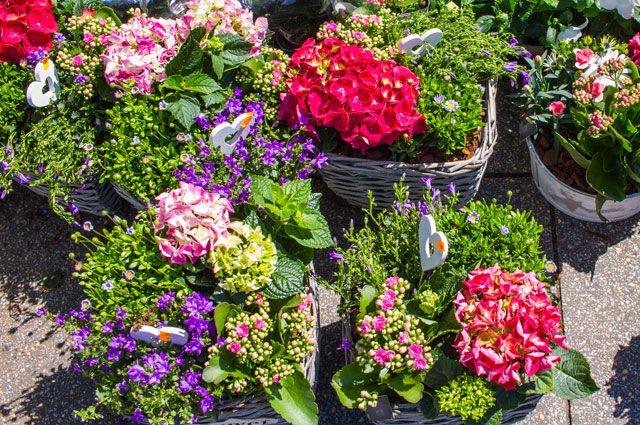 Летние покупки. Как выбрать многолетние цветы для дачи