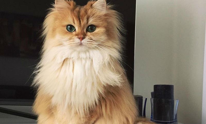 Самая фотогеничная кошка в мире