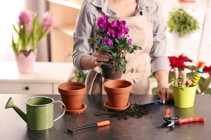 Эти лучшие домашние подкормки вернут жизнь даже сухому кусту!