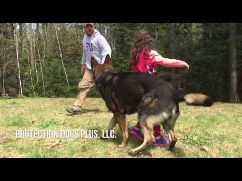 Мужчина подкрался к маленькой девочке, но она успела дать команду псу