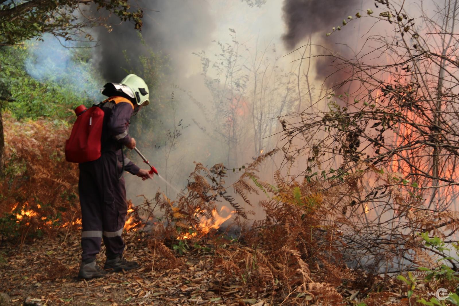 посмотреть картинки на тему пожар в лесу интересности исследования