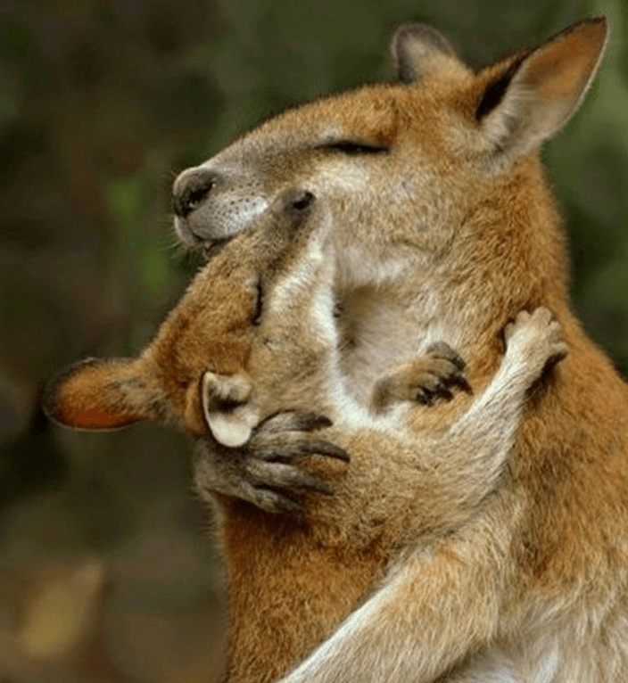Подборка из 15 трогательных фото, которые растопят даже самое черствое сердце фотография