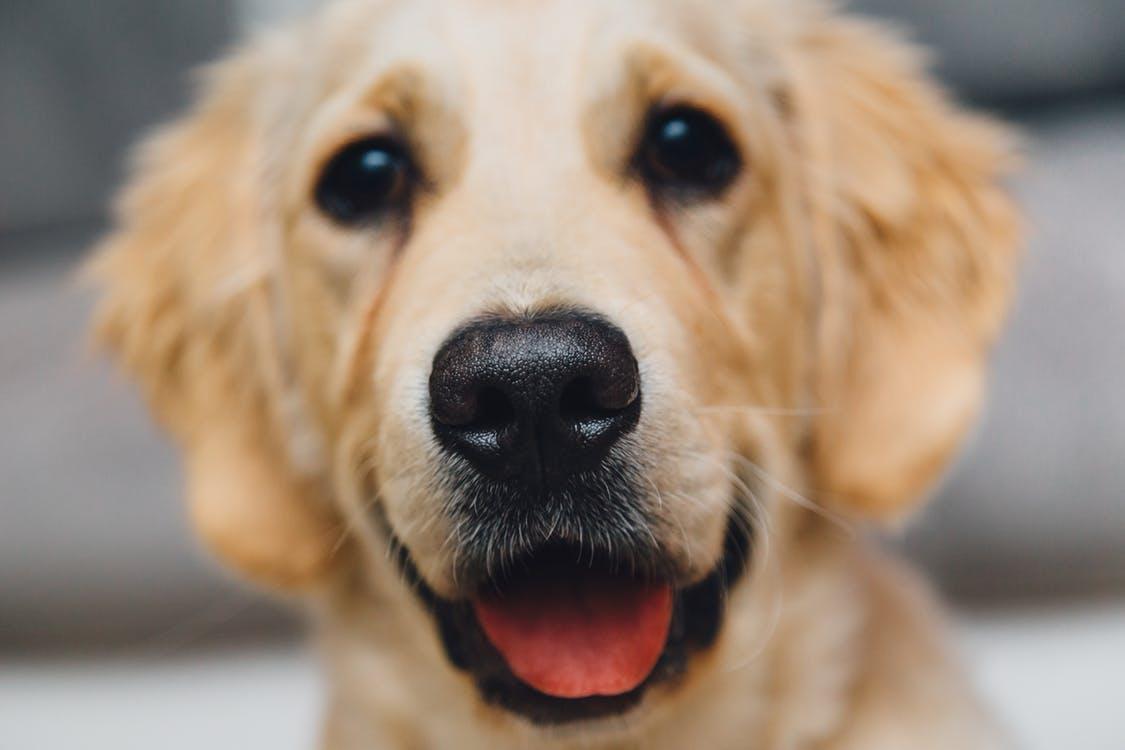 Новосибирские депутаты запретили собакам лаять по ночам