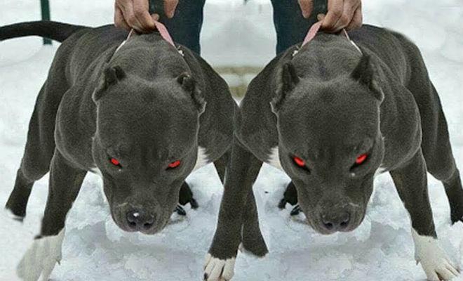 7 лучших собак для охраны дома