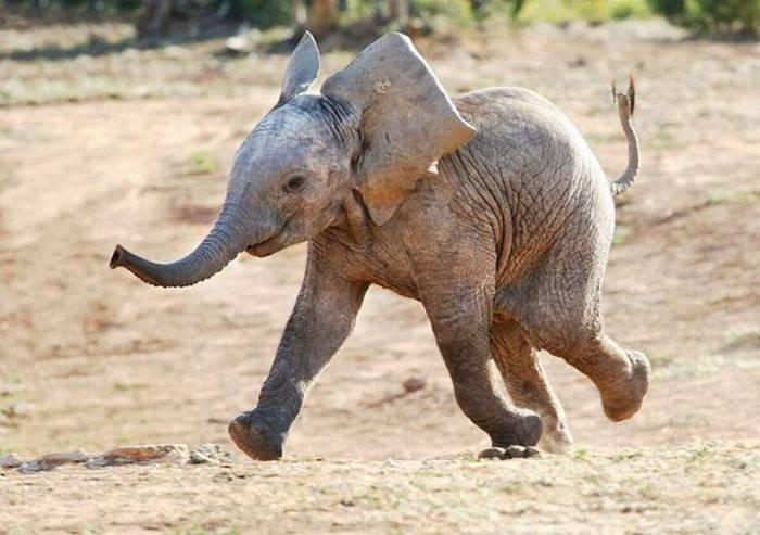 Картинка прикол слоник, лилии