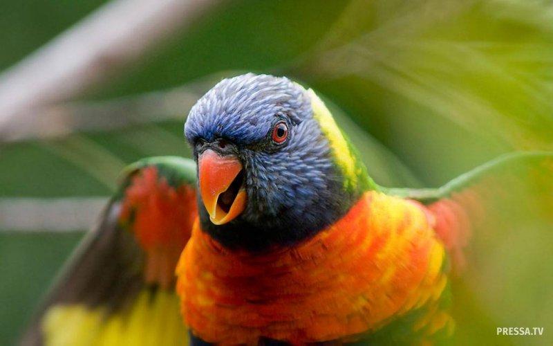 Молитва попугая