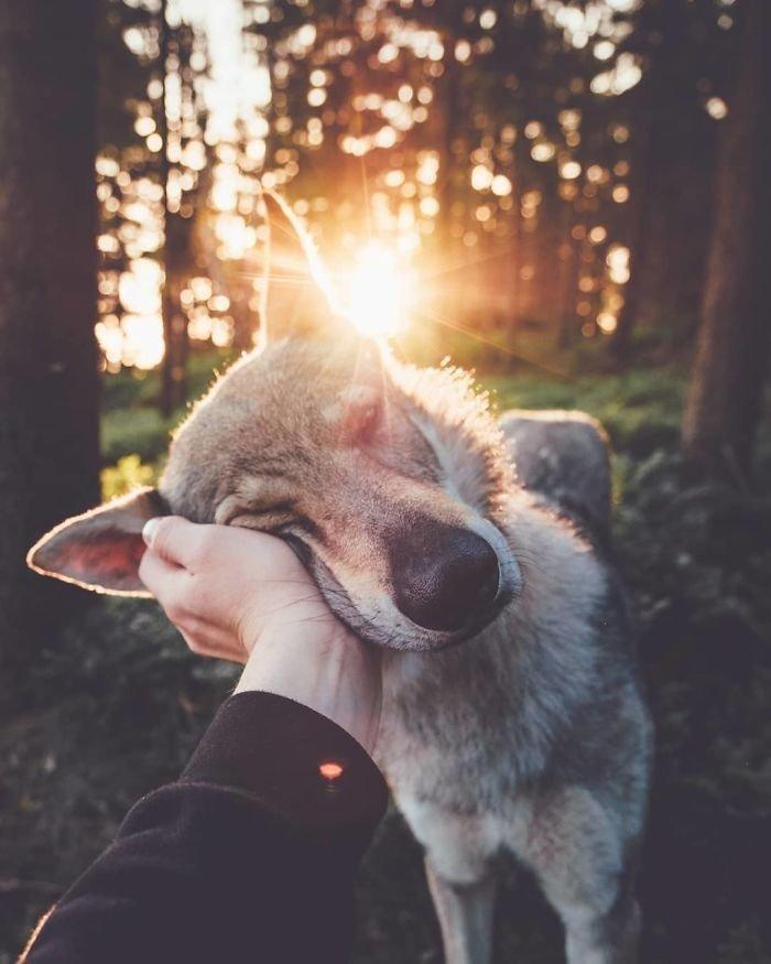13. follow me, инстаграмм, собака, собака - друг человека, флешмоб, флешмобы. instagram, фото природы, фотограф