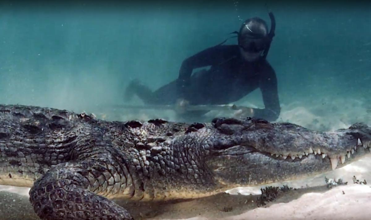 Видео: экстремал заглянул в пасть проплывавшему крокодилу