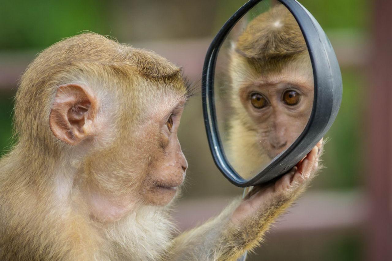 Смешные картинки с обезьянками с прикольными надписями, красивые