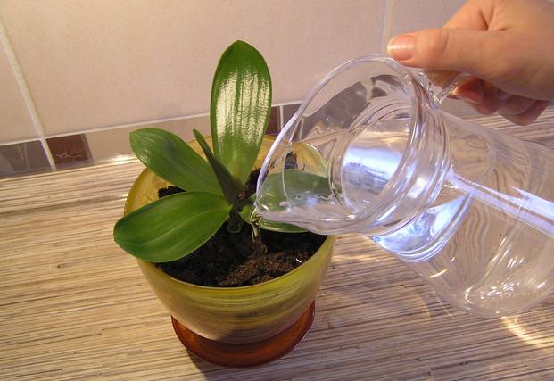 Ваша любимая орхидея нуждает…