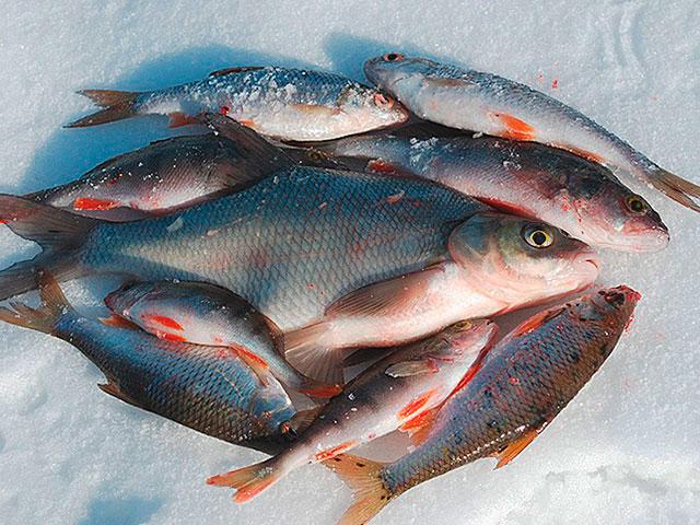 Зимняя рыбалка на реке Хопёр