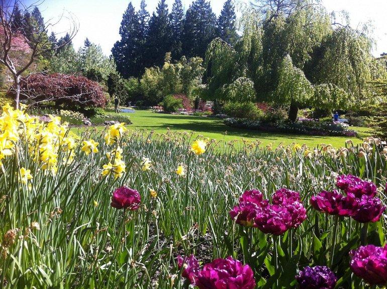 Парк королевы Елизаветы в Ванкувере также, королевы, Елизаветы, парке, видов, парка, которые, являются, частью, других, местные, много, множество, основан, карьер, цветов, парку, садов, могут, одним