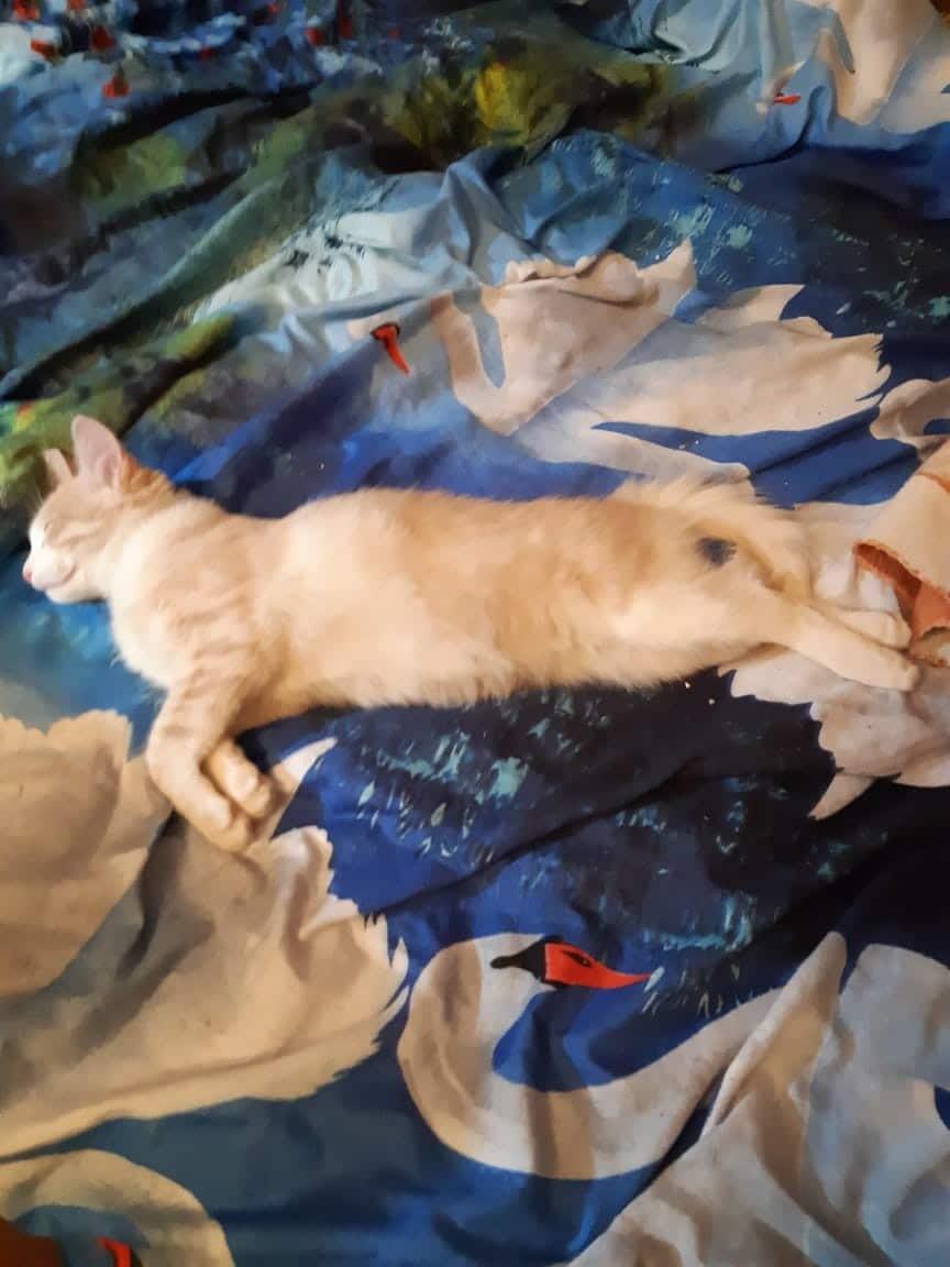 кот на кровати