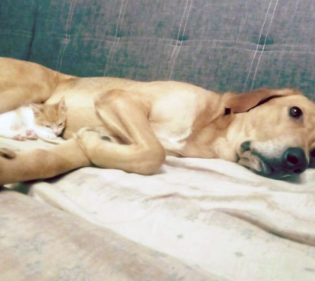 Недавно мой спасенный пес сам оказался сам в роли спасателя!
