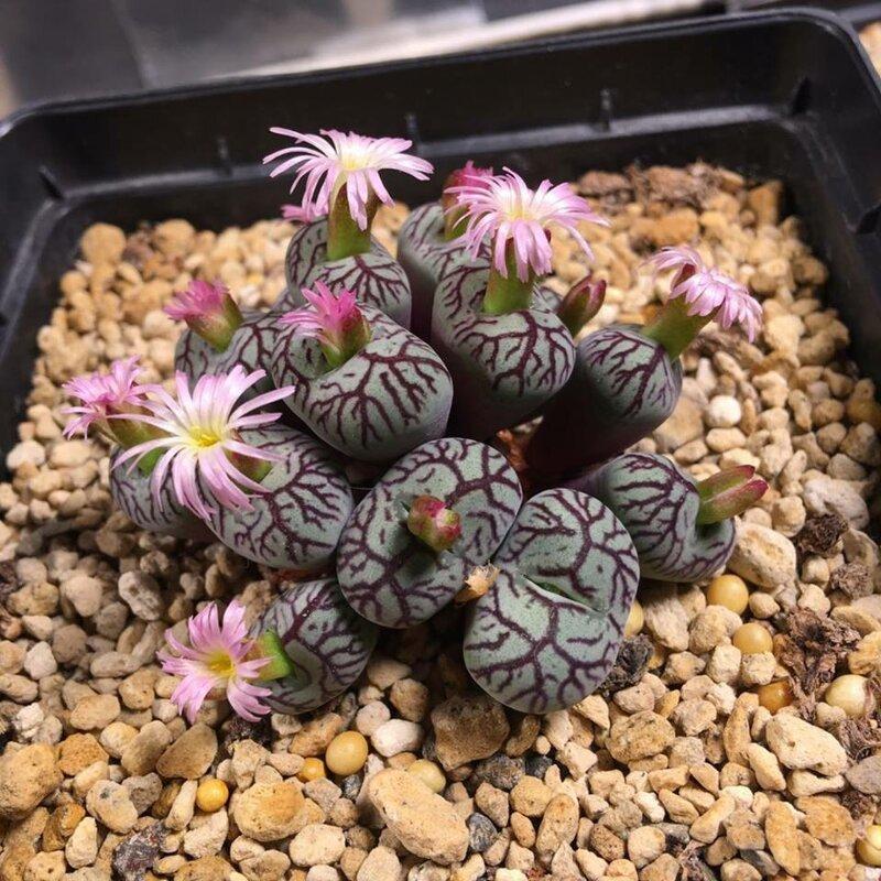 25 голых растений, прикрывающихся лишь цветами комнатные растения,цветоводство