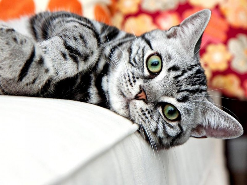 Думаете коты бездельники? Напрасно!