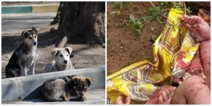 Эти собаки охраняли маленькое сокровище, брошенное умирать в лесу!