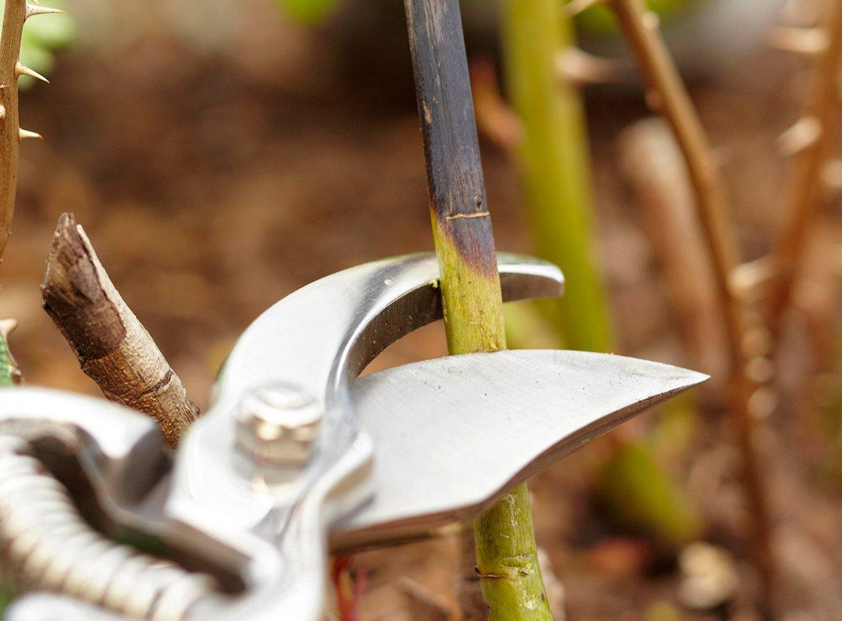 Тонкости осенней обрезки — что резать, когда и зачем дача,обрезка растений,полезные советы,сад и огород
