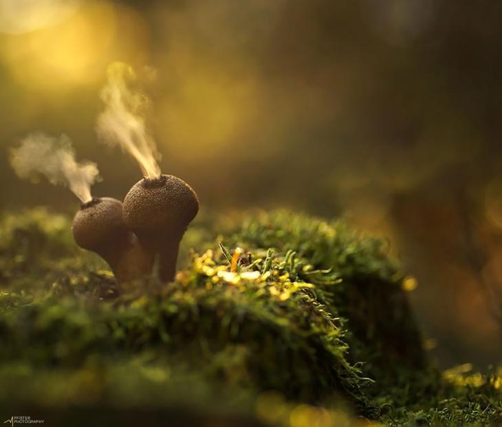 Мистический мир экзотических грибов