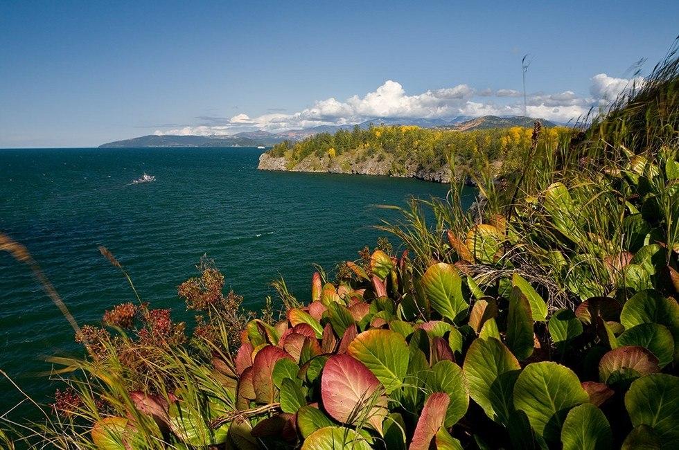расчет цветы и птицы фотографии озера байкал еще, что никто