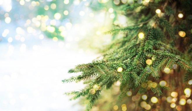 Как сохранить елку зеленой и свежей как можно дольше