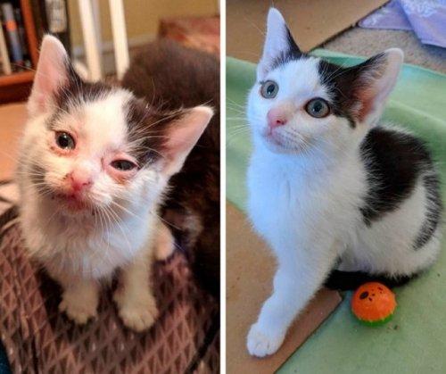 Чудесное преображение животных до и после того, как добрые люди подобрали их на улице