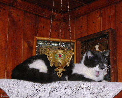 Почему коты  и кошки любят лежать около икон?  Кто нибудь может пояснить?
