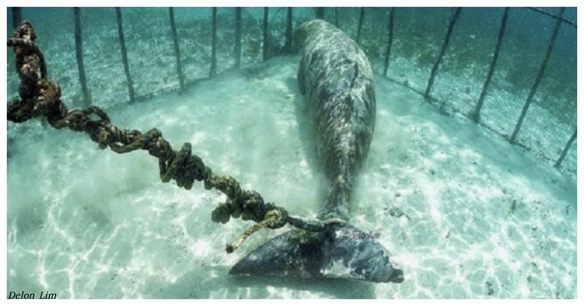 Туристы нашли на дне моря клетки с запертыми морскими животными