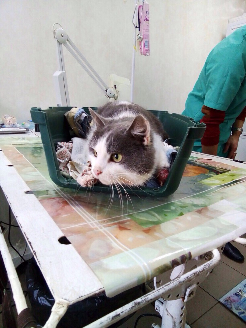 Бездомный кот приполз во двор с лапами, перетянутыми леской! 7 дней Василий терпел боль и ждал помощи