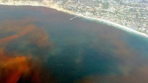 Знаменитый Красный прилив уб…