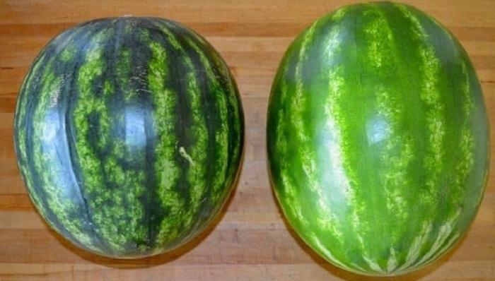 Как выбрать вкусный и спелый арбуз
