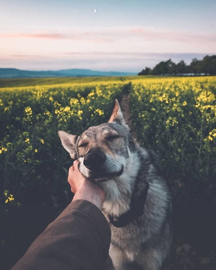 2. follow me, инстаграмм, собака, собака - друг человека, флешмоб, флешмобы. instagram, фото природы, фотограф