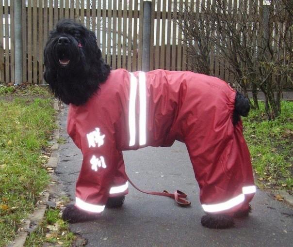 Утепляем питомца: комбинезон для собаки