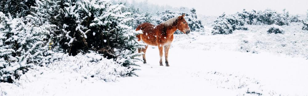 Нескучные идеи для зимнего отдыха