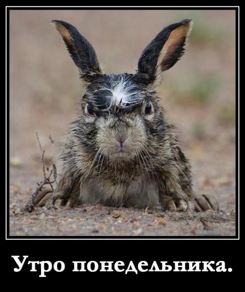 С животными всегда веселее)