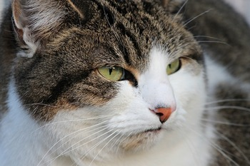 СКР узнало о красноярских живодерах, издевающихся над кошкой