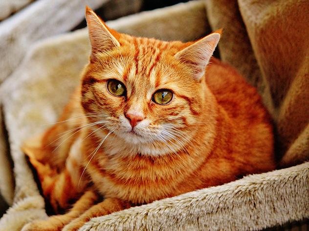 В Петербурге раздадут в добрые руки два десятка эрмитажных «солнечных» котов