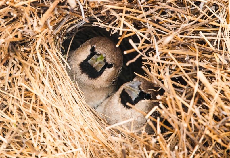 Удивительные птичьи гнезда