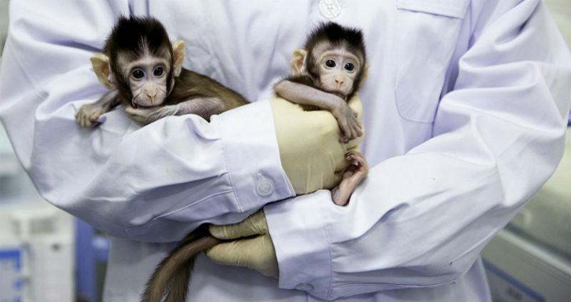 Китайские ученые впервые клонировали макак и назвали их «великий китайский народ»