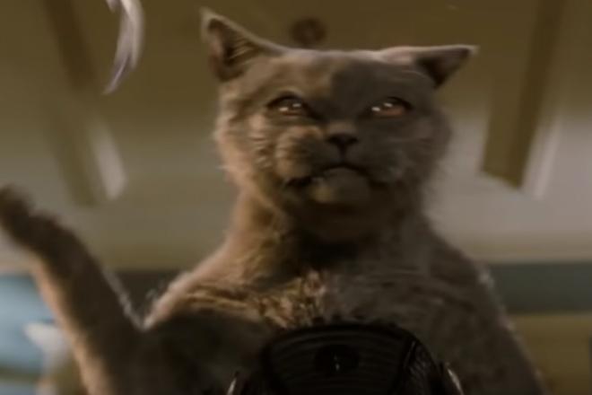 Опаснейшие породы кошек