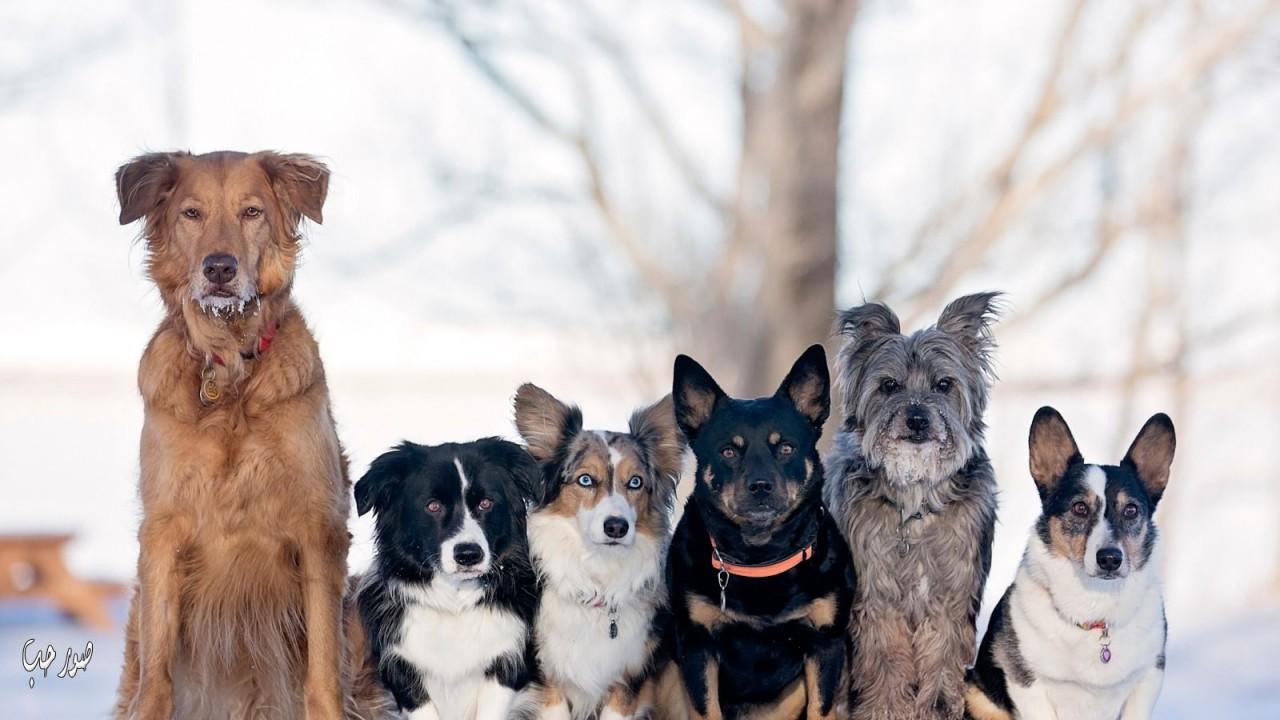 Как живут собаки в разных странах
