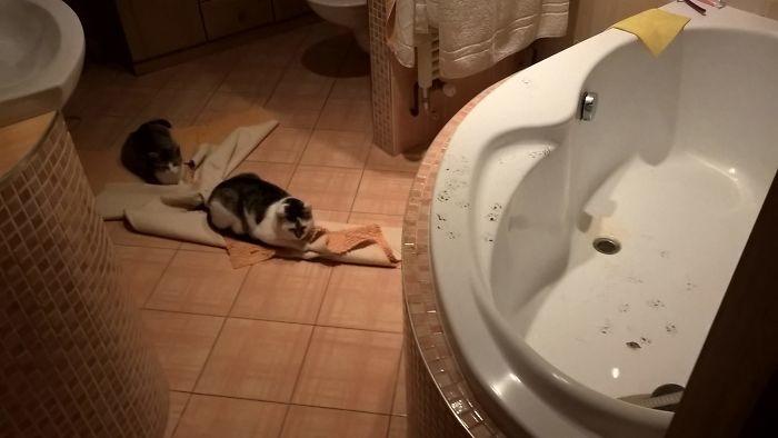 Когда только вымыл ванну дом, животные, проступок, шалость