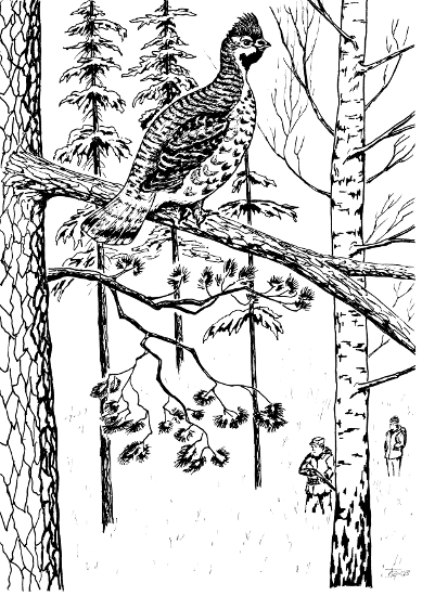 Птица цвета хаки