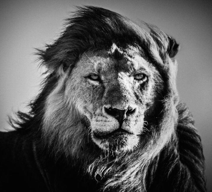 20 прекрасных черно-белых фотографий африканской дикой природы