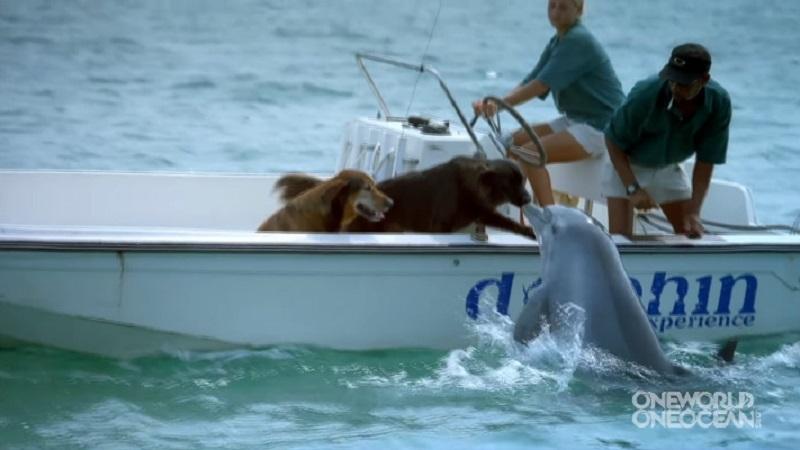 Дельфин подплыл к лодке и поцеловал одну из собак