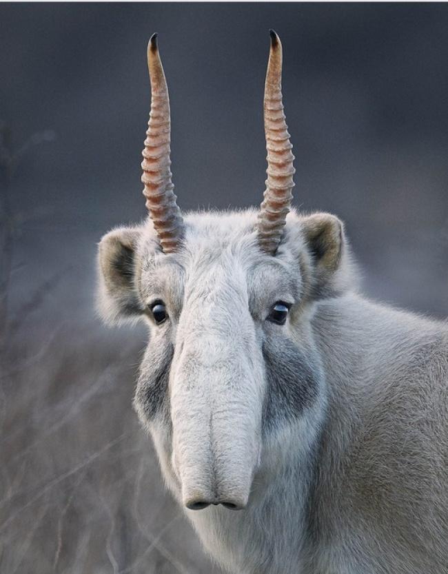 Фотограф объехал полмира, чтобы запечатлеть животных, которые вот-вот исчезнут с лица Земли