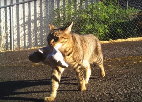 Хозяйственный кот Серега